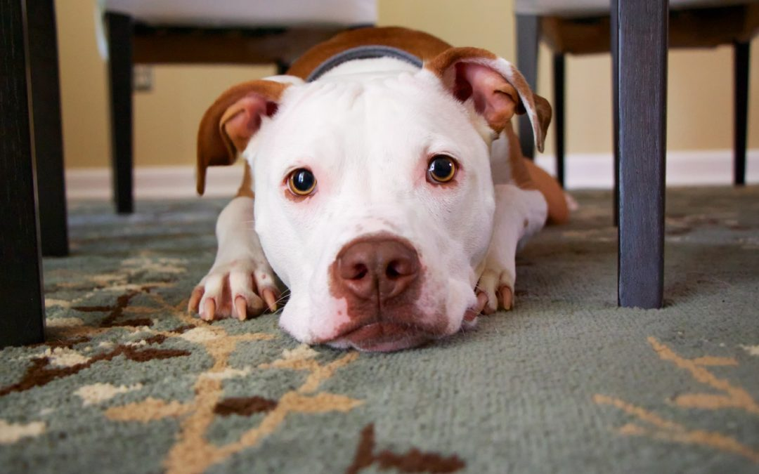 Smart Ways to Protect Your Pet in Your Home
